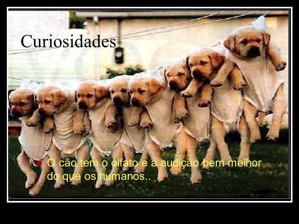 A vida do cão Alguns são domésticos,infelizmente outros moram na rua.