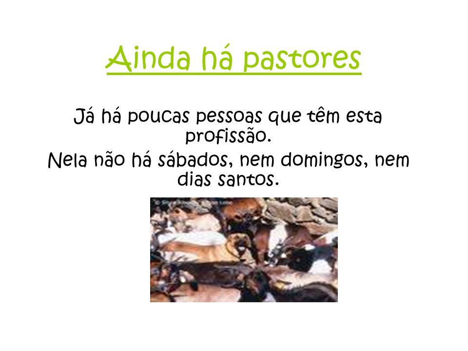 Ainda há pastores Já há poucas pessoas que têm esta profissão.