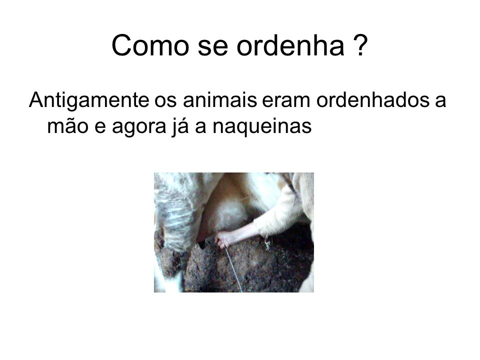 Como se ordenha Antigamente os animais eram ordenhados a mão e agora já a naqueinas