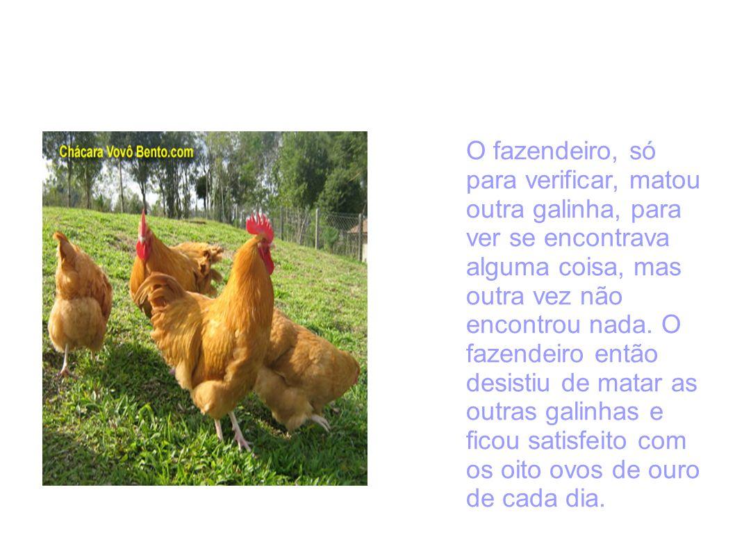 O fazendeiro, só para verificar, matou outra galinha, para ver se encontrava alguma coisa, mas outra vez não encontrou nada.