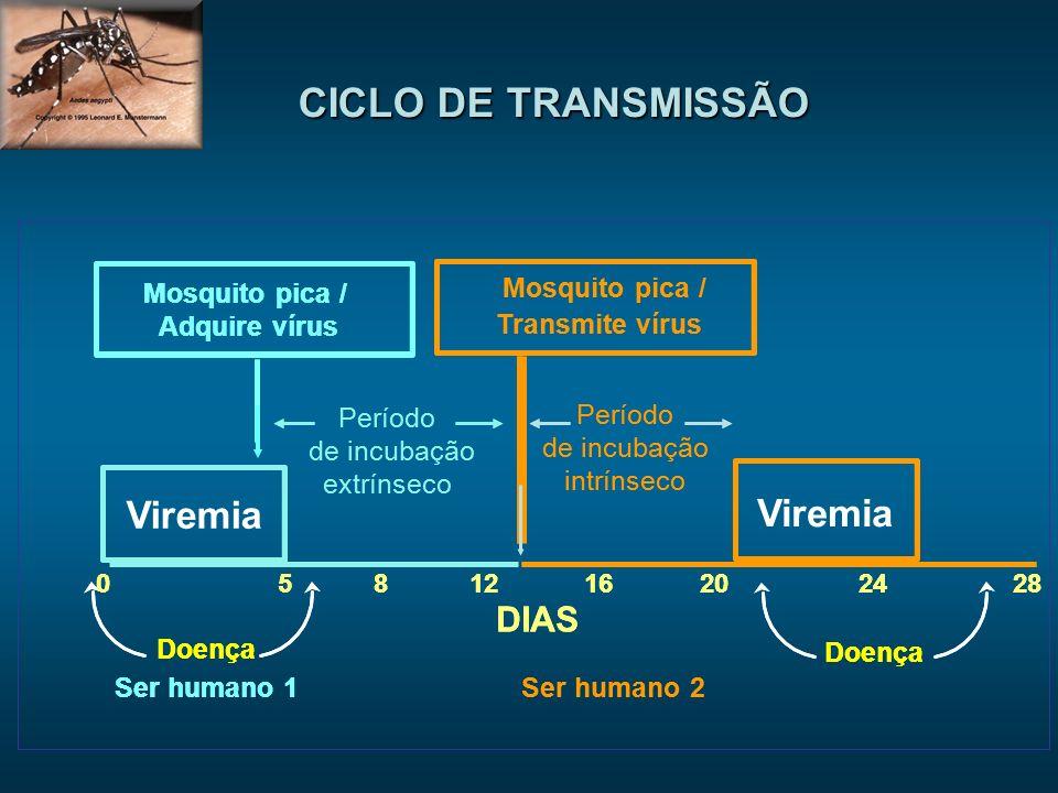 Período de incubação extrínseco DIAS 0581216202428 Ser humano 1Ser humano 2 Mosquito pica / Adquire vírus Mosquito pica / Transmite vírus Período de incubação intrínseco Doença Período de incubação extrínseco DIAS 0581216202428 Ser humano 1Ser humano 2 Mosquito pica / Adquire vírus Mosquito pica / Transmite vírus Período de incubação intrínseco Doença Viremia CICLO DE TRANSMISSÃO