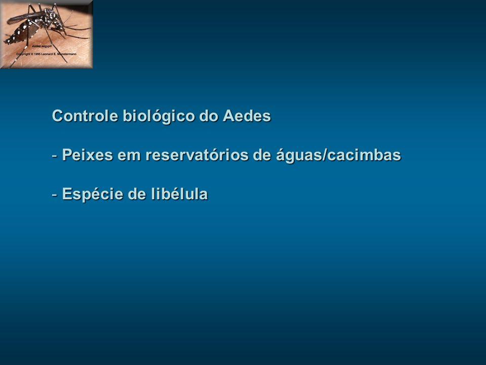 Controle biológico do Aedes - Peixes em reservatórios de águas/cacimbas - Espécie de libélula