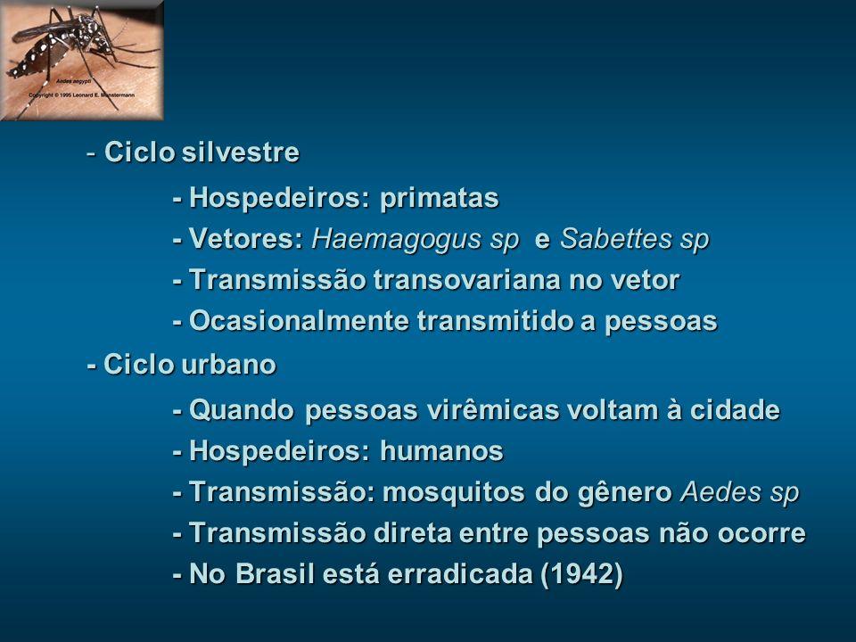 - Ciclo silvestre - Hospedeiros: primatas - Vetores: Haemagogus sp e Sabettes sp - Transmissão transovariana no vetor - Ocasionalmente transmitido a pessoas - Ciclo urbano - Quando pessoas virêmicas voltam à cidade - Hospedeiros: humanos - Transmissão: mosquitos do gênero Aedes sp - Transmissão direta entre pessoas não ocorre - No Brasil está erradicada (1942)