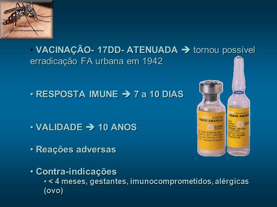 VACINAÇÃO- 17DD- ATENUADA tornou possível erradicação FA urbana em 1942 RESPOSTA IMUNE 7 a 10 DIAS RESPOSTA IMUNE 7 a 10 DIAS VALIDADE 10 ANOS VALIDADE 10 ANOS Reações adversas Reações adversas Contra-indicações Contra-indicações < 4 meses, gestantes, imunocomprometidos, alérgicas (ovo) < 4 meses, gestantes, imunocomprometidos, alérgicas (ovo)