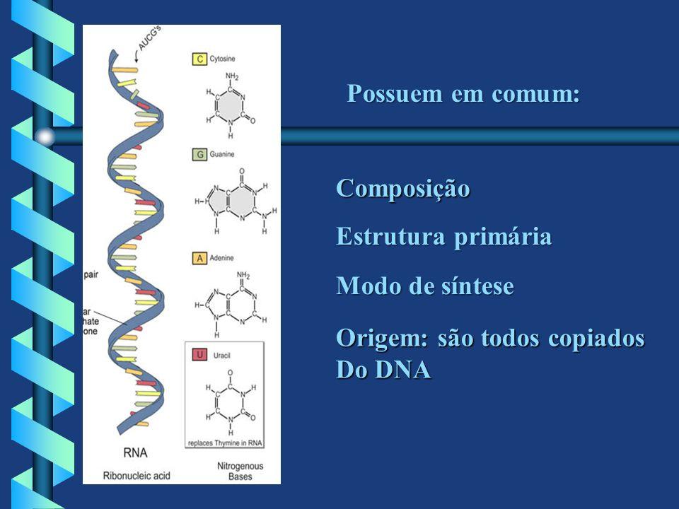 Possuem em comum: Composição Estrutura primária Modo de síntese Origem: são todos copiados Do DNA