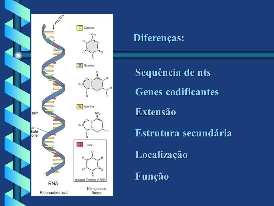 Diferenças: Sequência de nts Genes codificantes Extensão Estrutura secundária Localização Função