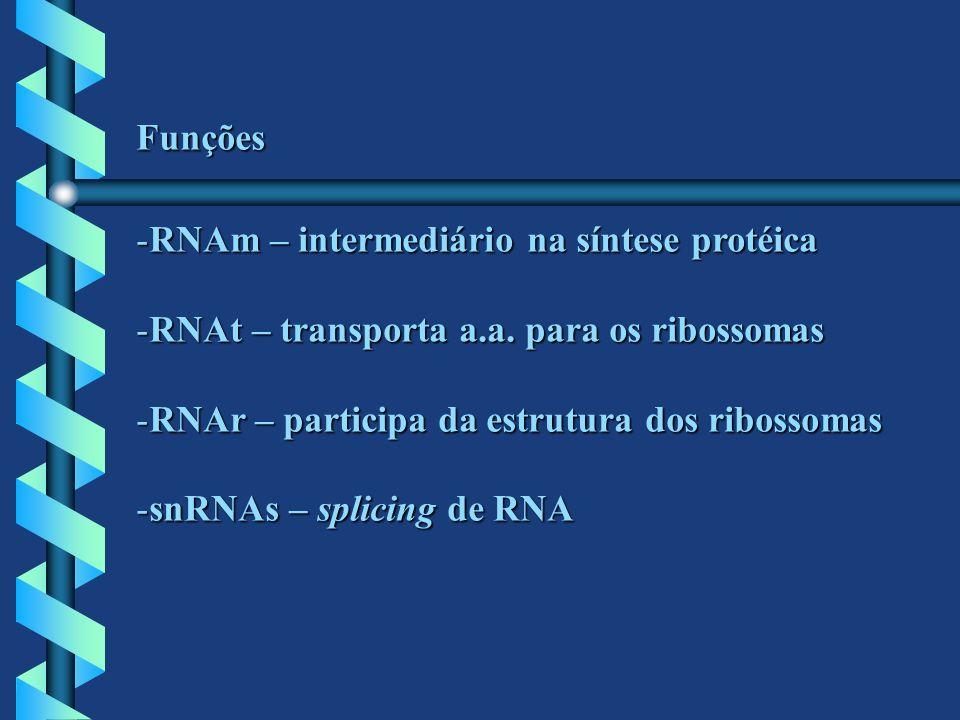 Funções -RNAm – intermediário na síntese protéica -RNAt – transporta a.a. para os ribossomas -RNAr – participa da estrutura dos ribossomas -snRNAs – s