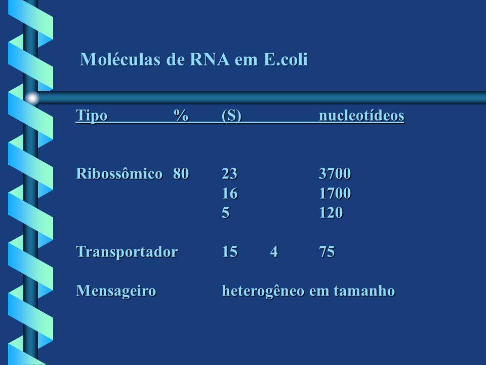 Moléculas de RNA em E.coli Tipo%(S)nucleotídeos Ribossômico80233700 161700 5120 Transportador15475 Mensageiroheterogêneo em tamanho