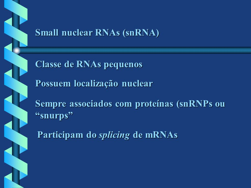Small nuclear RNAs (snRNA) Classe de RNAs pequenos Possuem localização nuclear Sempre associados com proteínas (snRNPs ou snurps Participam do splicin