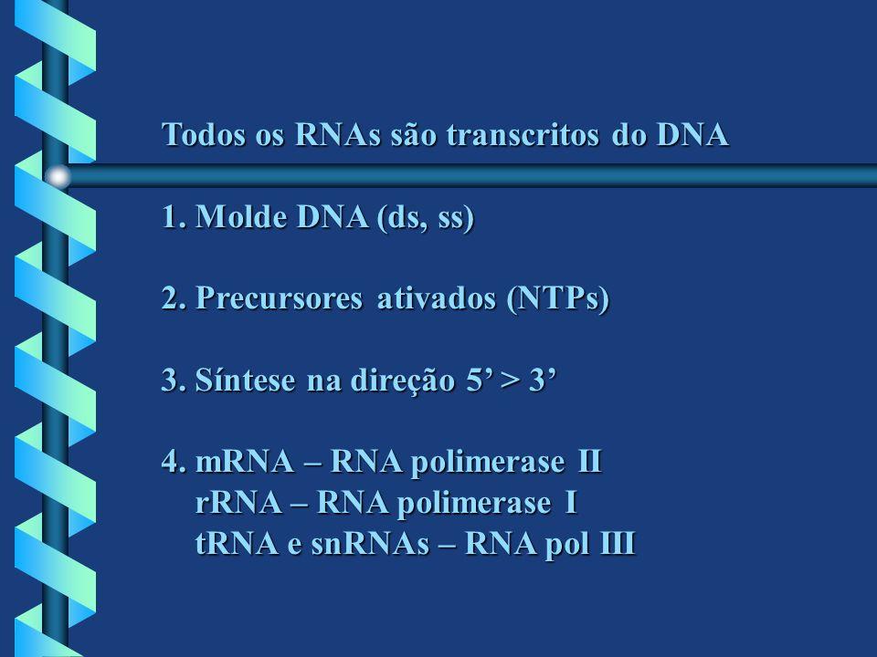 Todos os RNAs são transcritos do DNA 1. Molde DNA (ds, ss) 2. Precursores ativados (NTPs) 3. Síntese na direção 5 > 3 4. mRNA – RNA polimerase II rRNA