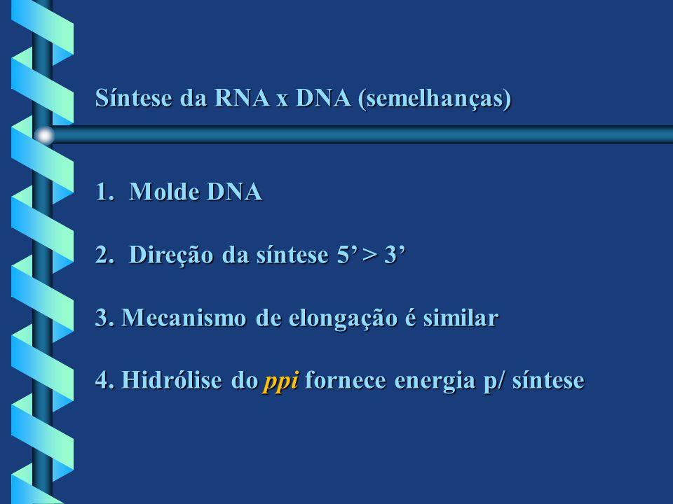 Síntese da RNA x DNA (semelhanças) 1.Molde DNA 2.Direção da síntese 5 > 3 3. Mecanismo de elongação é similar 4. Hidrólise do ppi fornece energia p/ s