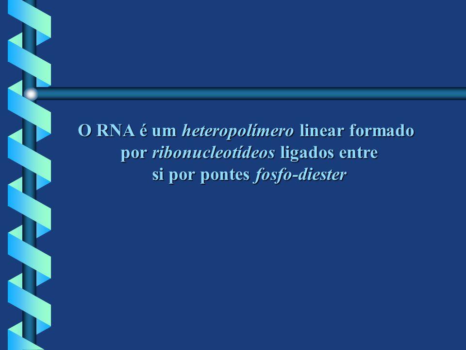 O RNA é um heteropolímero linear formado por ribonucleotídeos ligados entre si por pontes fosfo-diester