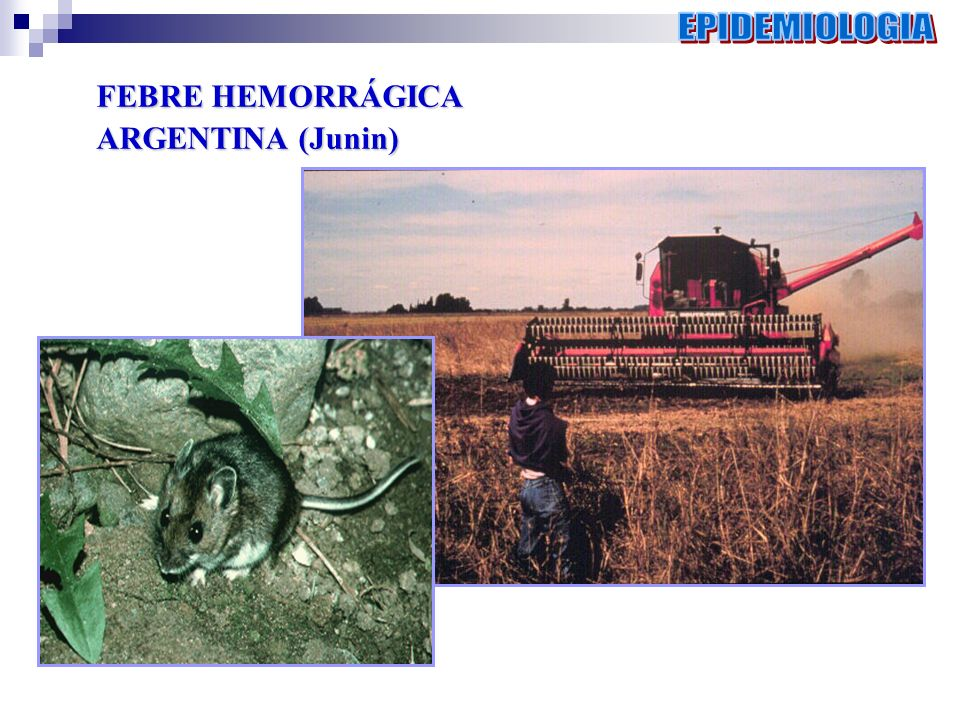 FEBRE HEMORRÁGICA ARGENTINA (Junin)