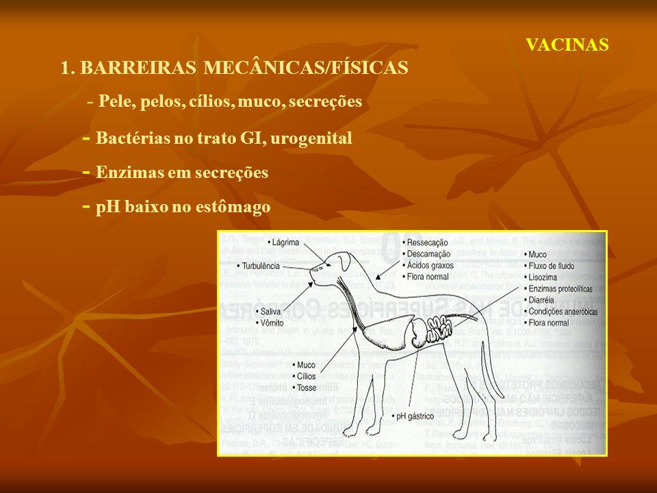 1. BARREIRAS MECÂNICAS/FÍSICAS - Pele, pelos, cílios, muco, secreções - Bactérias no trato GI, urogenital - Enzimas em secreções - pH baixo no estômag