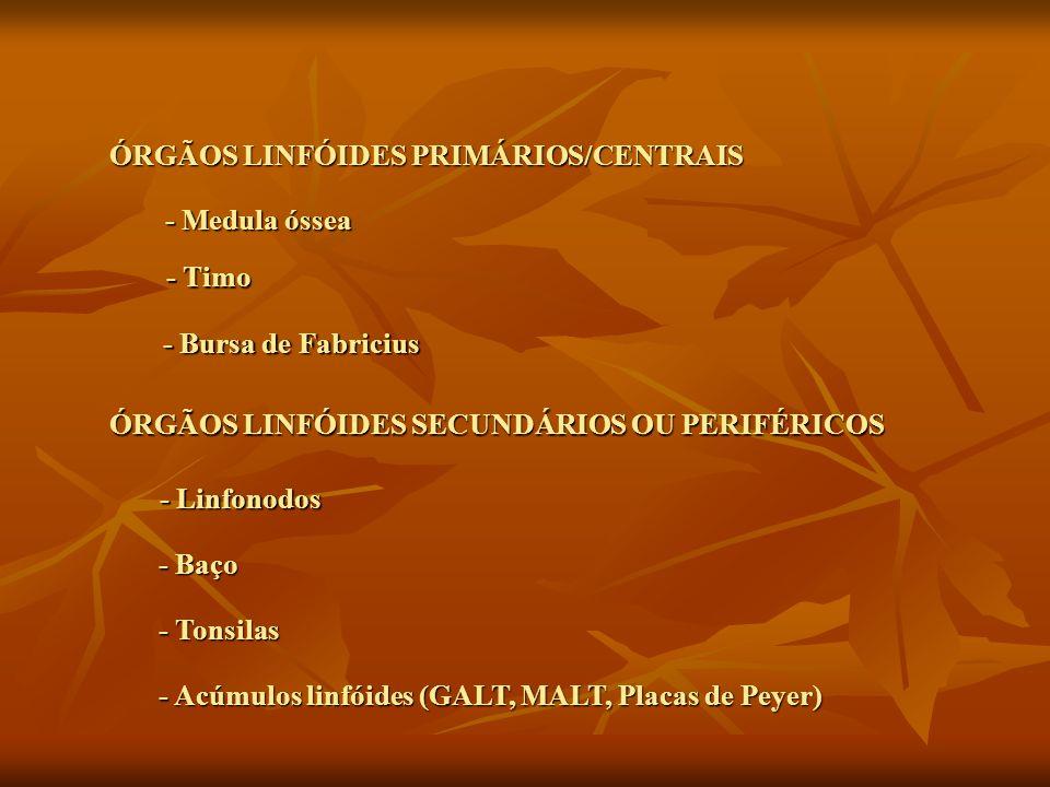 ÓRGÃOS LINFÓIDES PRIMÁRIOS/CENTRAIS - Medula óssea - Timo - Bursa de Fabricius ÓRGÃOS LINFÓIDES SECUNDÁRIOS OU PERIFÉRICOS - Linfonodos - Baço - Tonsi