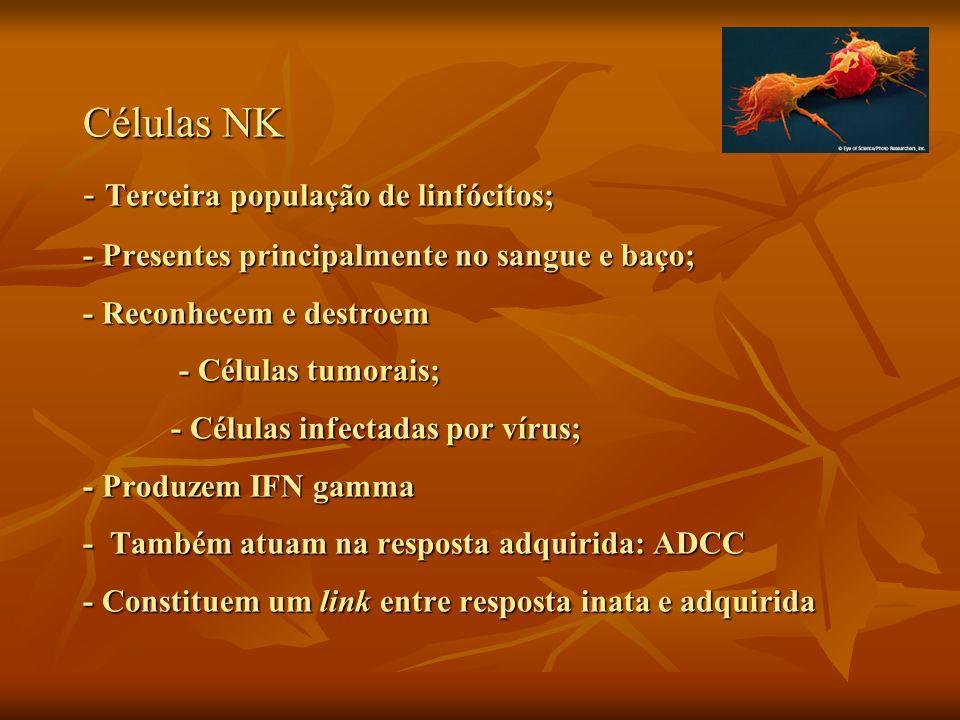 Células NK - Terceira população de linfócitos; - Presentes principalmente no sangue e baço; - Reconhecem e destroem - Células tumorais; - Células infe