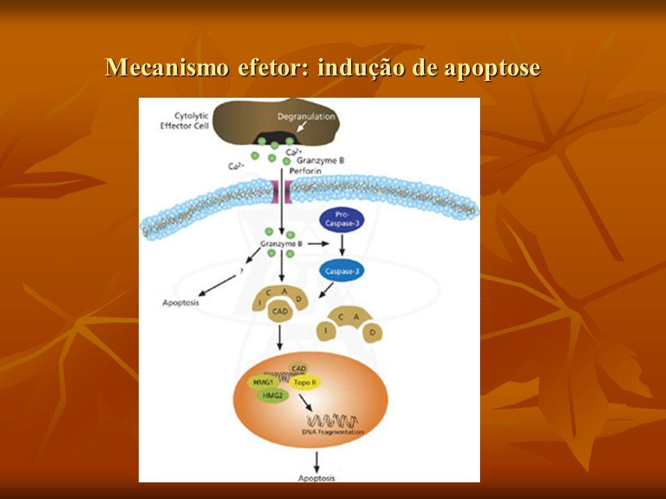 Mecanismo efetor: indução de apoptose