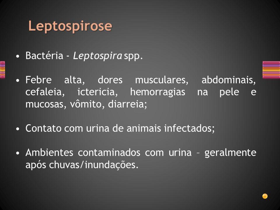 Leptospirose Bactéria - Leptospira spp. Febre alta, dores musculares, abdominais, cefaleia, ictericia, hemorragias na pele e mucosas, vômito, diarreia
