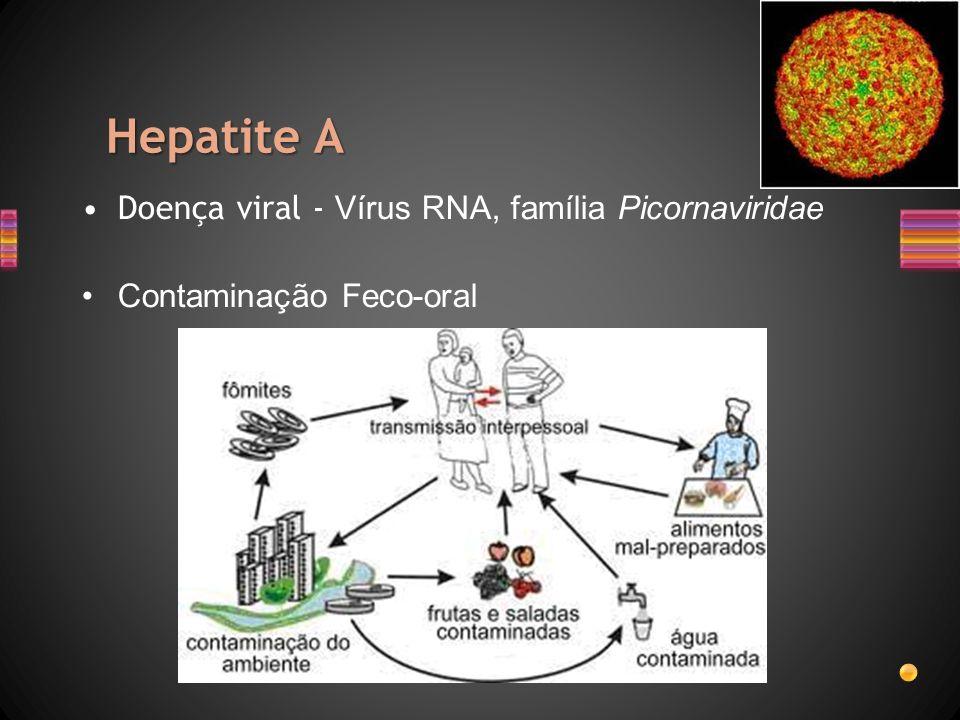 Hepatite A Doença viral - Vírus RNA, família Picornaviridae Contaminação Feco-oral