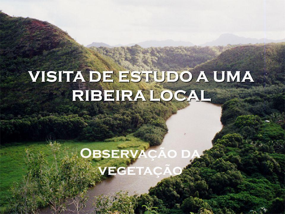 VISITA DE ESTUDO A UMA RIBEIRA LOCAL Observação da vegetação