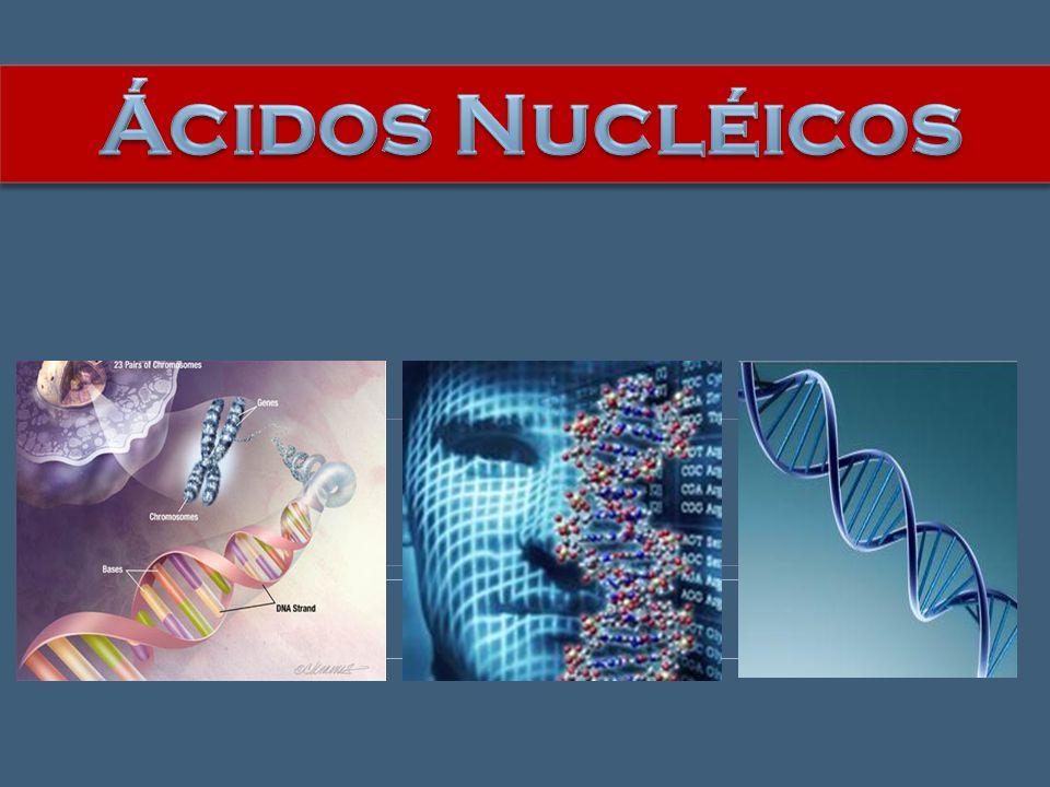 1 códon 3 nucleotídeos no RNAm 7 códons 21 nucleotídeos
