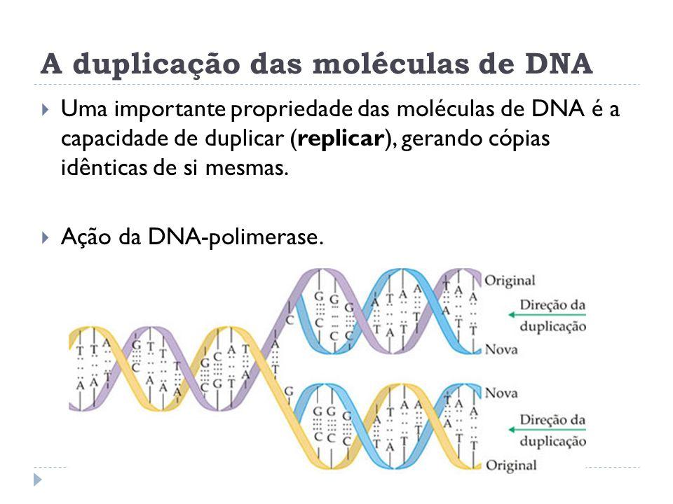 A duplicação das moléculas de DNA Uma importante propriedade das moléculas de DNA é a capacidade de duplicar (replicar), gerando cópias idênticas de s