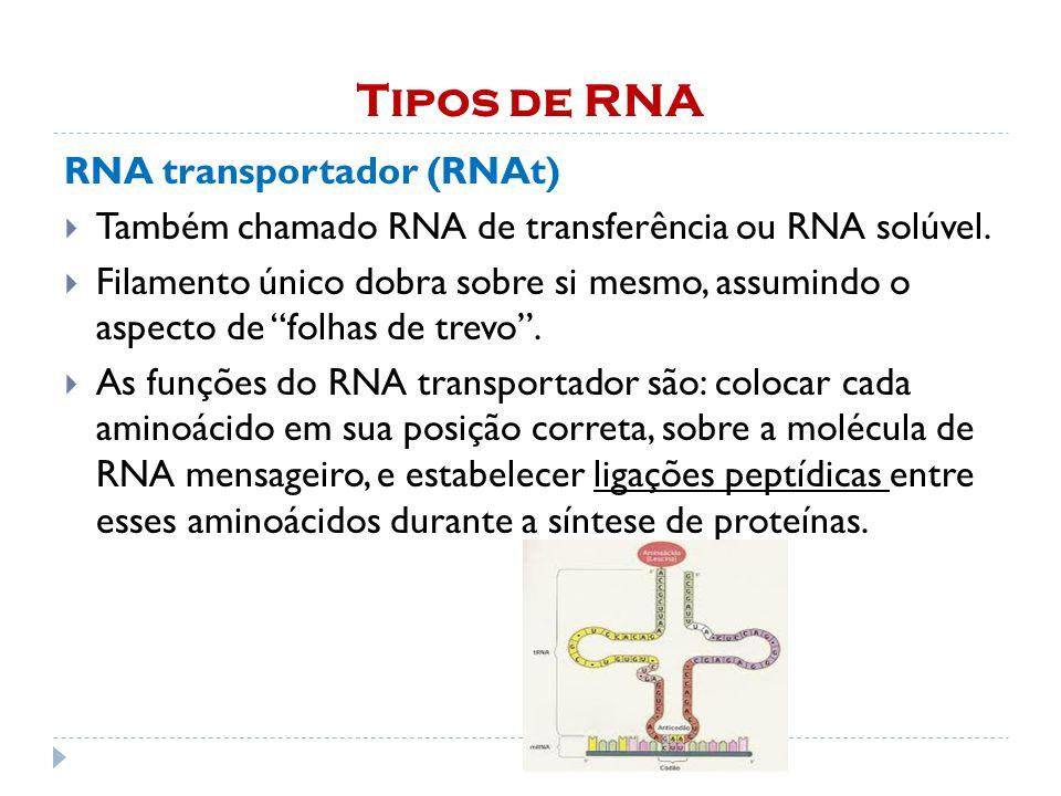 Tipos de RNA RNA transportador (RNAt) Também chamado RNA de transferência ou RNA solúvel. Filamento único dobra sobre si mesmo, assumindo o aspecto de