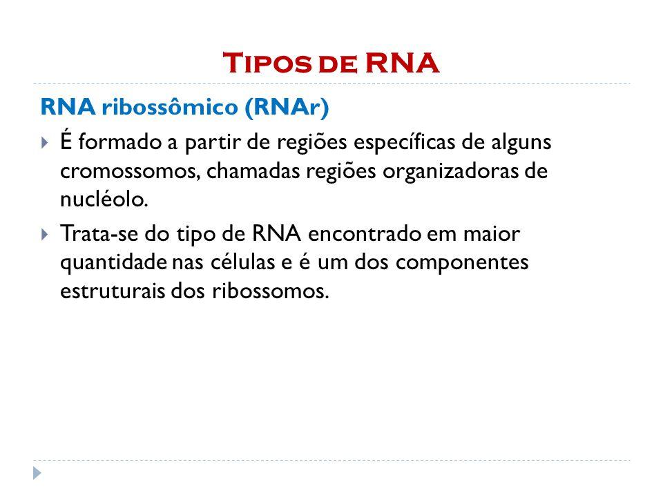 Tipos de RNA RNA ribossômico (RNAr) É formado a partir de regiões específicas de alguns cromossomos, chamadas regiões organizadoras de nucléolo. Trata