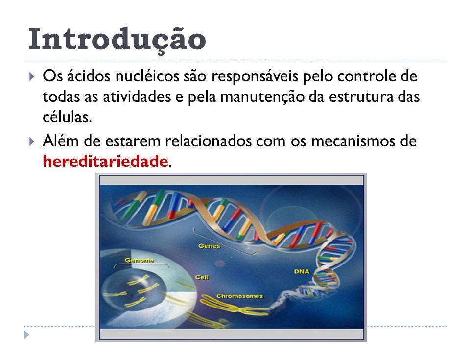 Introdução Os ácidos nucléicos são responsáveis pelo controle de todas as atividades e pela manutenção da estrutura das células. Além de estarem relac