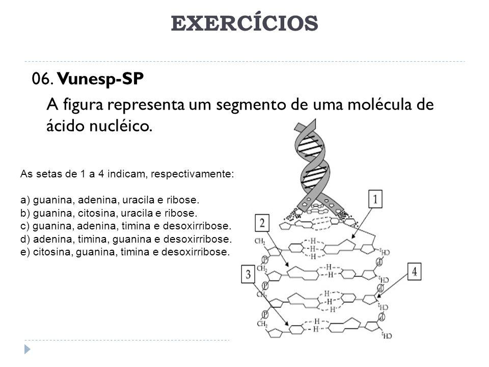 EXERCÍCIOS 06. Vunesp-SP A figura representa um segmento de uma molécula de ácido nucléico. As setas de 1 a 4 indicam, respectivamente: a) guanina, ad