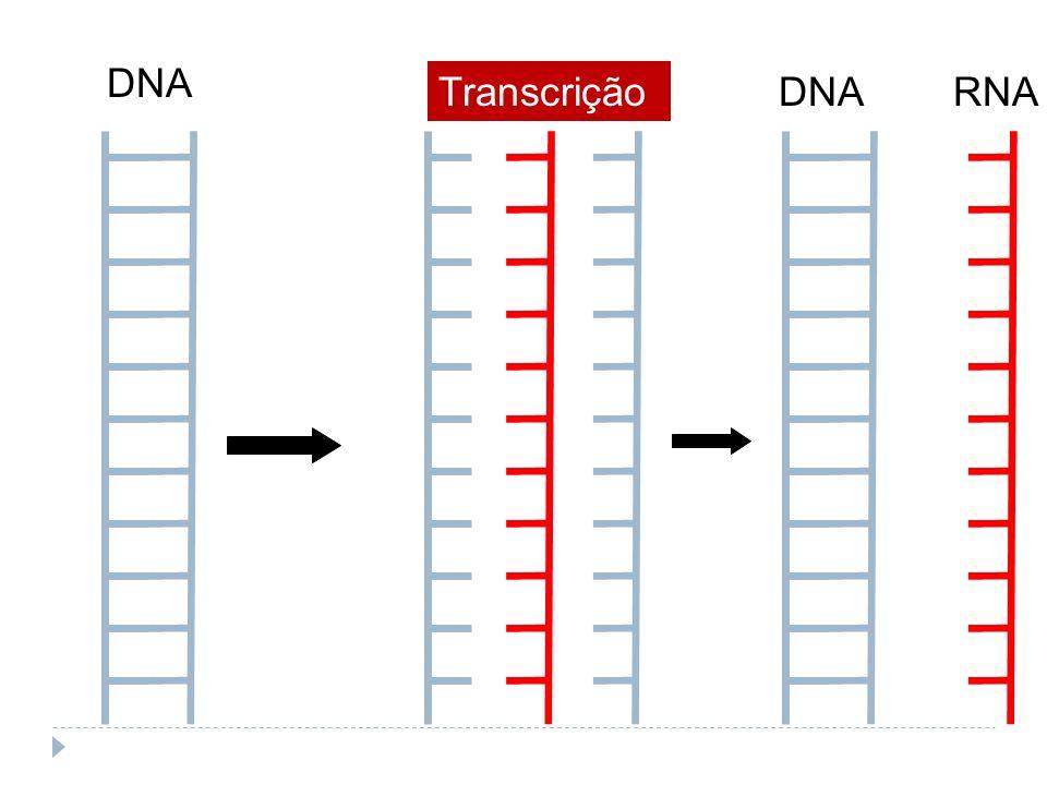 DNA TranscriçãoDNARNA