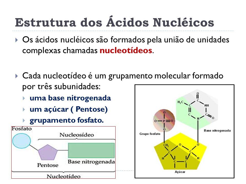 Estrutura dos Ácidos Nucléicos Os ácidos nucléicos são formados pela união de unidades complexas chamadas nucleotídeos. Cada nucleotídeo é um grupamen