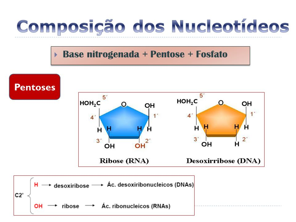 RNA t Levam os aminoácidos anticódon Levam os aminoácidos para o RNAm durante o processo de síntese protéica.