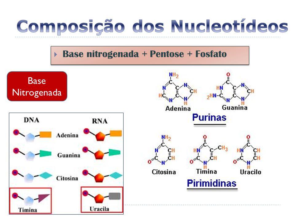Base nitrogenada + Pentose + Fosfato Base Nitrogenada