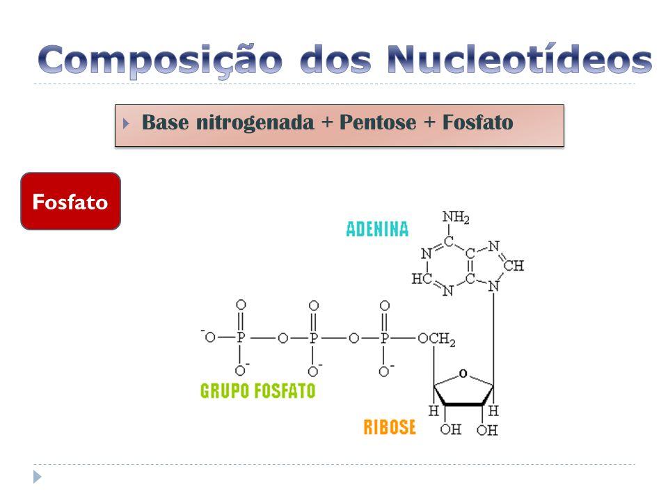 EXERCÍCIOS 03.Os ácidos nucléicos são as moléculas mestras da vida.