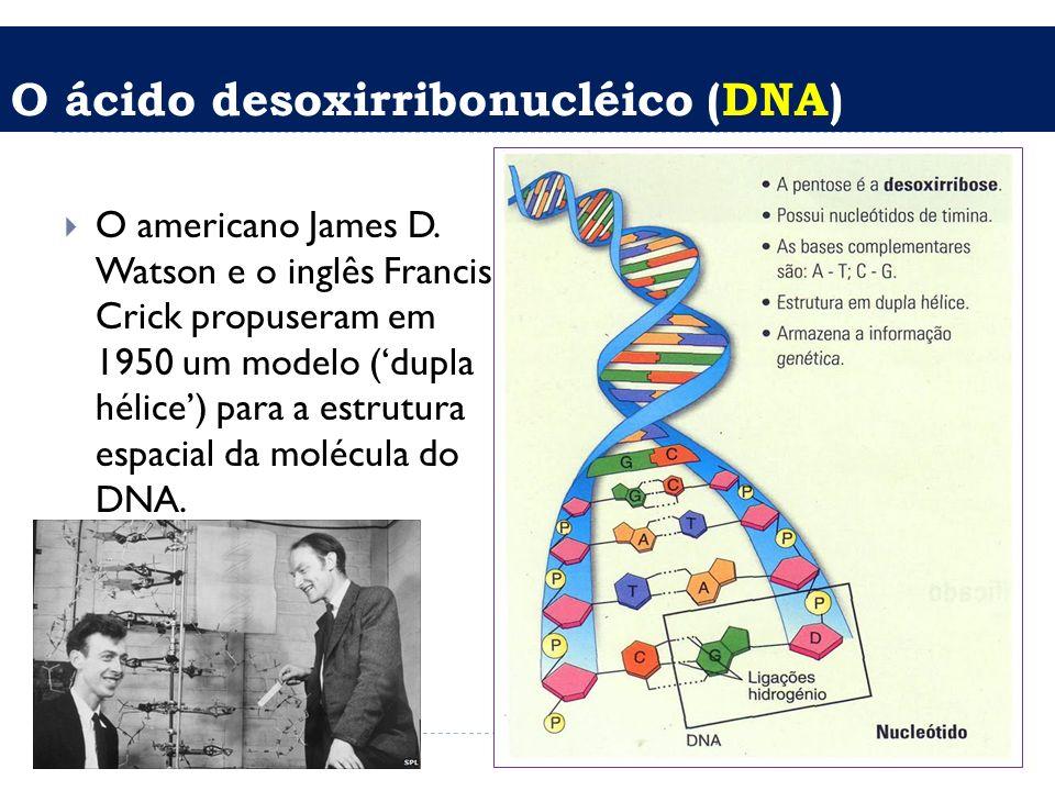 O ácido desoxirribonucléico (DNA) O americano James D. Watson e o inglês Francis Crick propuseram em 1950 um modelo (dupla hélice) para a estrutura es