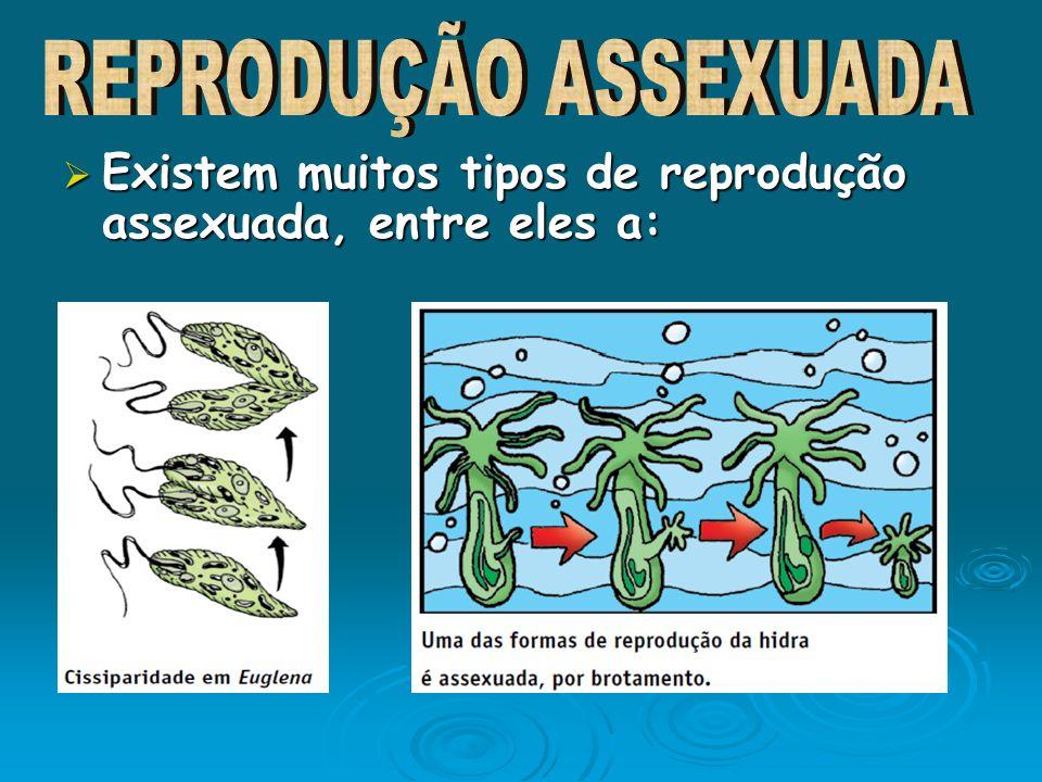 Existem muitos tipos de reprodução assexuada, entre eles a: Existem muitos tipos de reprodução assexuada, entre eles a: