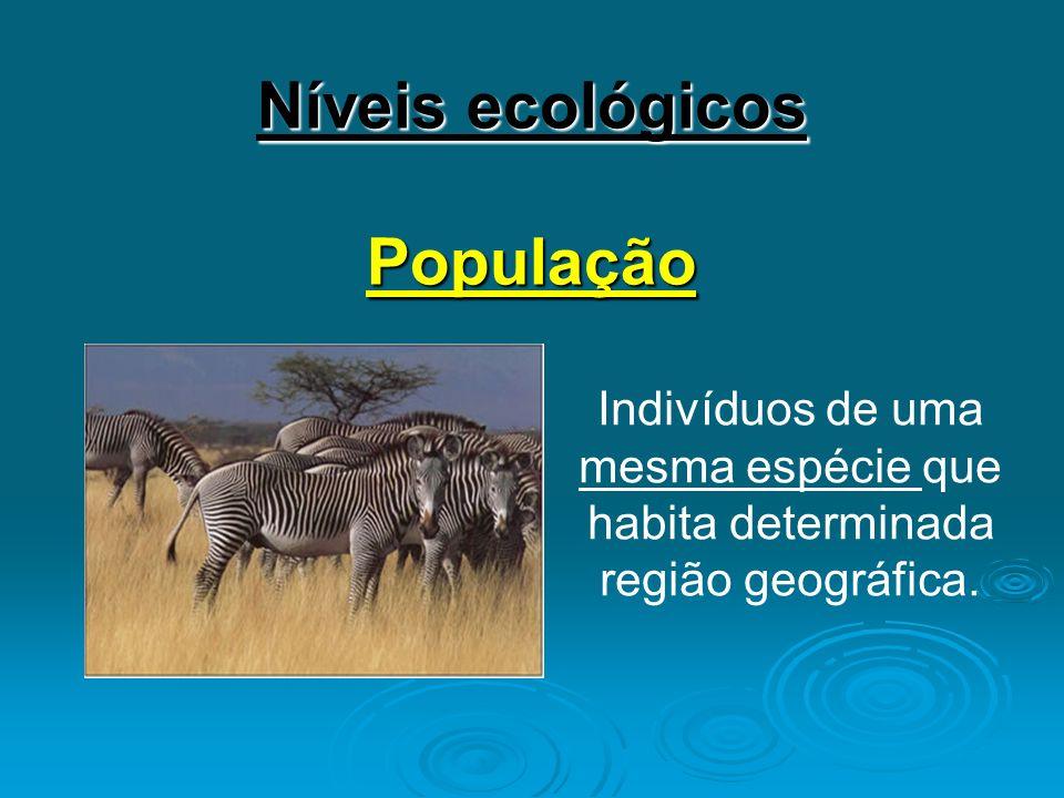 Níveis ecológicos População Indivíduos de uma mesma espécie que habita determinada região geográfica.