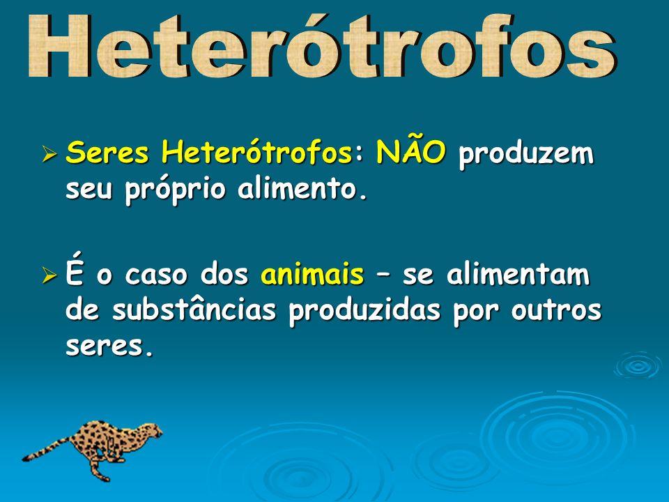Seres Heterótrofos: NÃO produzem seu próprio alimento. Seres Heterótrofos: NÃO produzem seu próprio alimento. É o caso dos animais – se alimentam de s