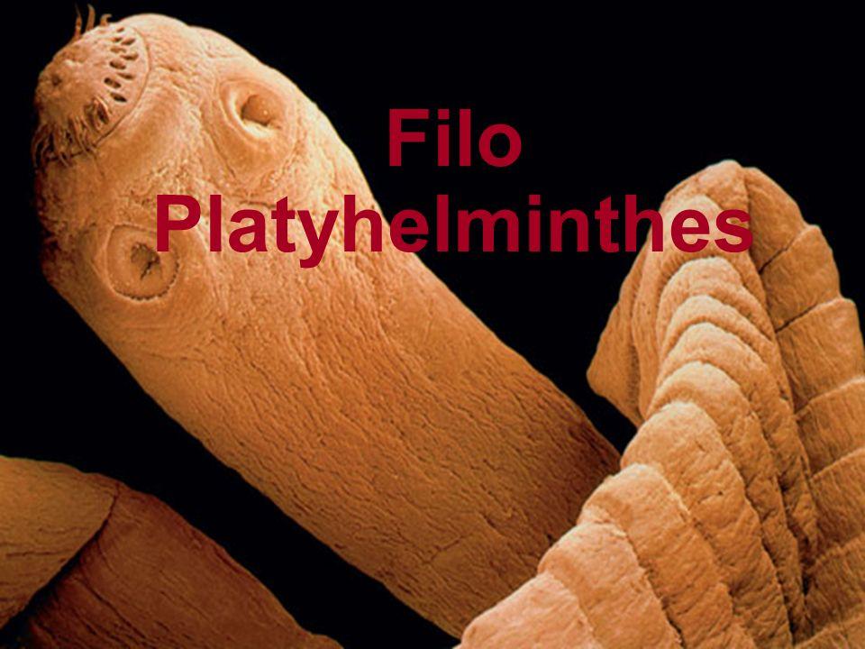 Características gerais O termo platelminto refere-se a verme de corpo achatado.