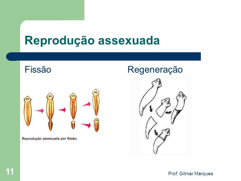 Reprodução assexuada Fissão Regeneração 11 Prof. Gilmar Marques