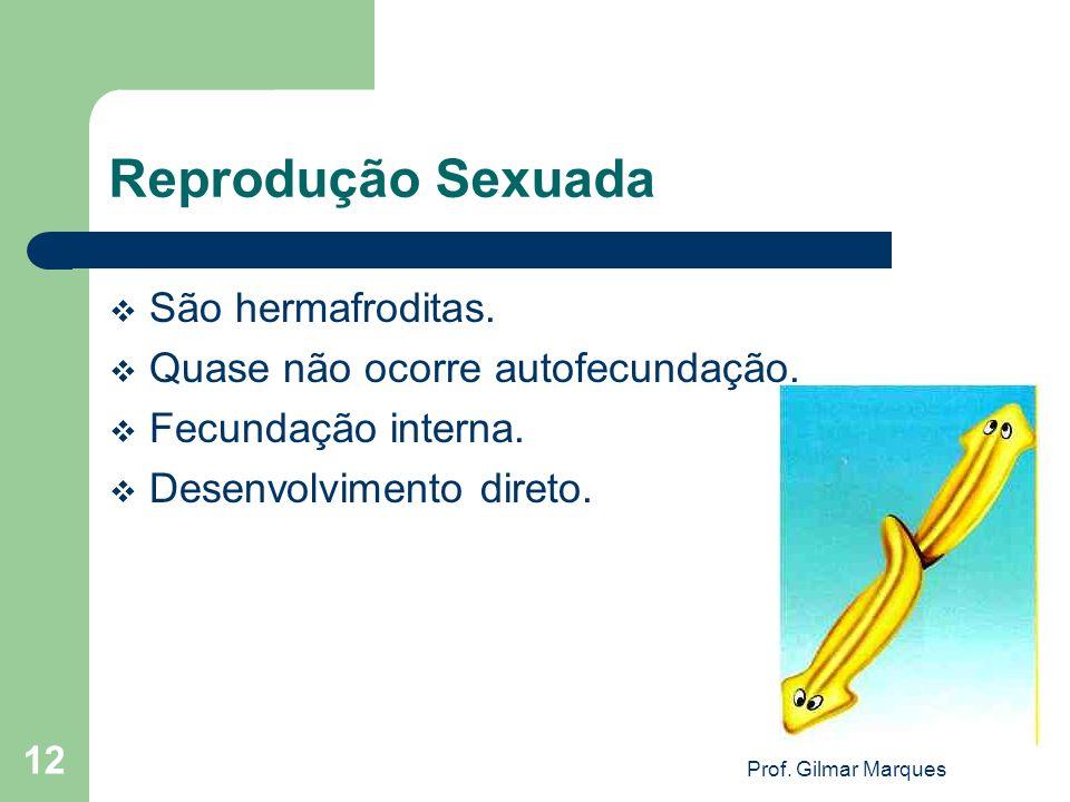 Reprodução Sexuada São hermafroditas. Quase não ocorre autofecundação. Fecundação interna. Desenvolvimento direto. 12 Prof. Gilmar Marques