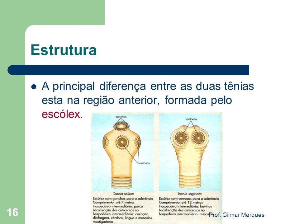 Estrutura A principal diferença entre as duas tênias esta na região anterior, formada pelo escólex. 16 Prof. Gilmar Marques