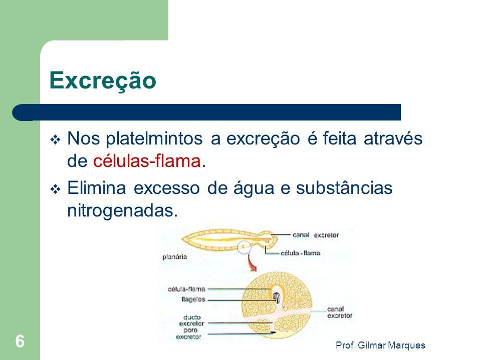 Excreção Nos platelmintos a excreção é feita através de células-flama. Elimina excesso de água e substâncias nitrogenadas. 6 Prof. Gilmar Marques