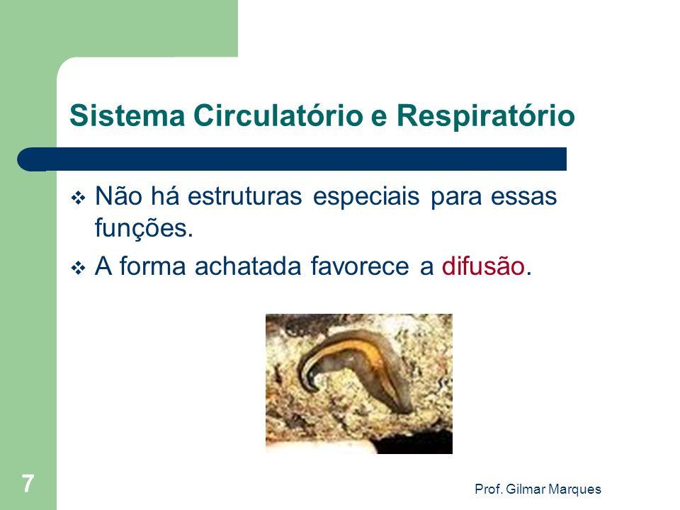 Sistema Circulatório e Respiratório Não há estruturas especiais para essas funções. A forma achatada favorece a difusão. 7 Prof. Gilmar Marques