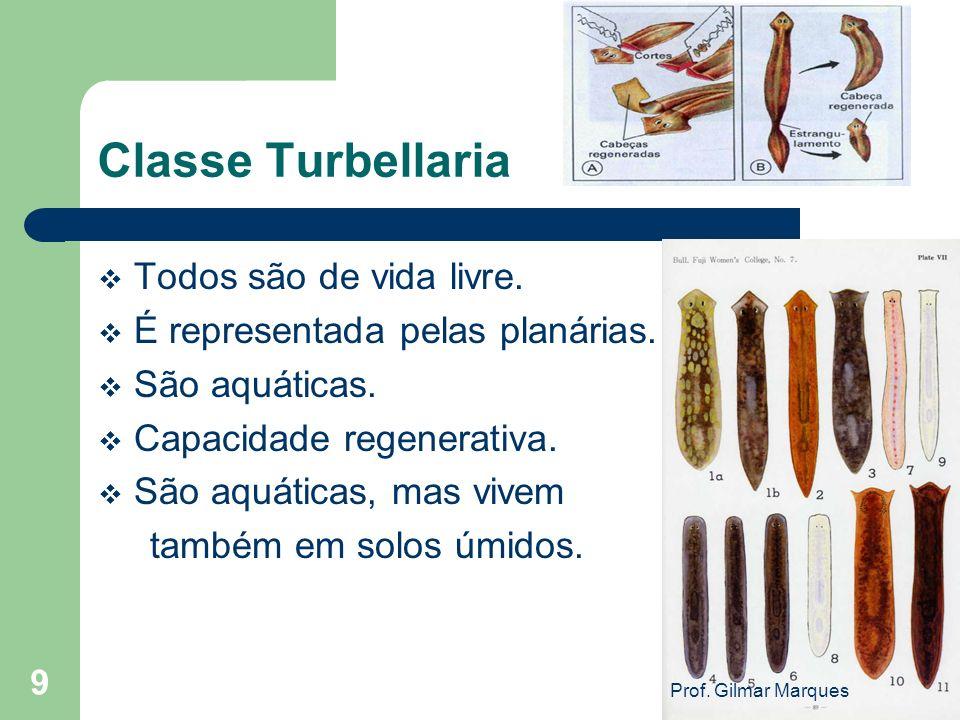 Classe Turbellaria Todos são de vida livre. É representada pelas planárias. São aquáticas. Capacidade regenerativa. São aquáticas, mas vivem também em