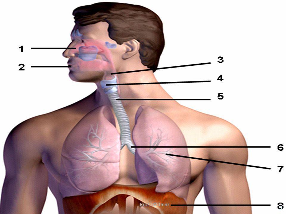Tuberculose é uma infecção causada pela bactéria Mycobacterium tuberculosis que se instala geralmente nos pulmões.