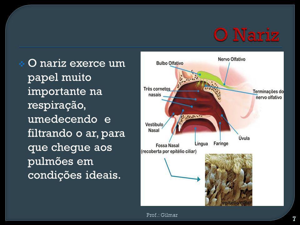 O nariz exerce um papel muito importante na respiração, umedecendo e filtrando o ar, para que chegue aos pulmões em condições ideais. 7 Prof.: Gilmar