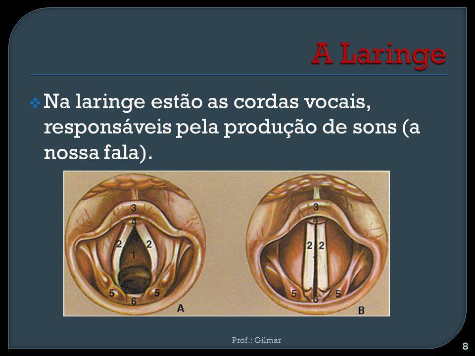 Na laringe estão as cordas vocais, responsáveis pela produção de sons (a nossa fala). 8 Prof.: Gilmar