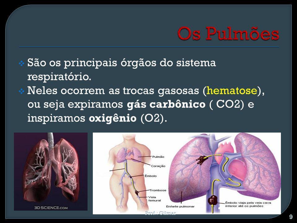 São os principais órgãos do sistema respiratório. Neles ocorrem as trocas gasosas (hematose), ou seja expiramos gás carbônico ( CO2) e inspiramos oxig